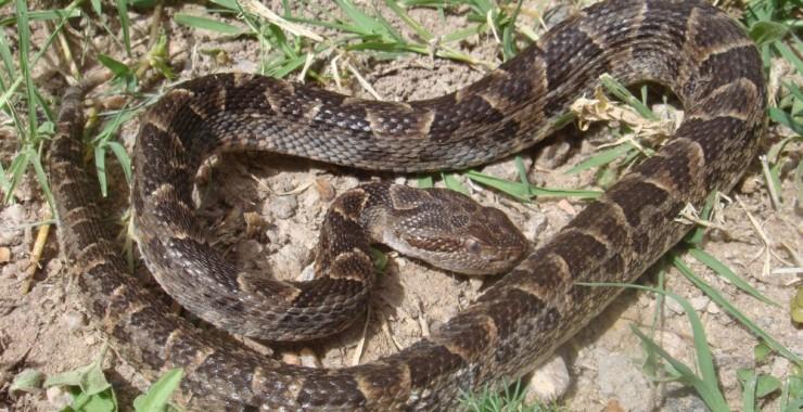 Capacitarán sobre animales silvestres venenosos de San Luis