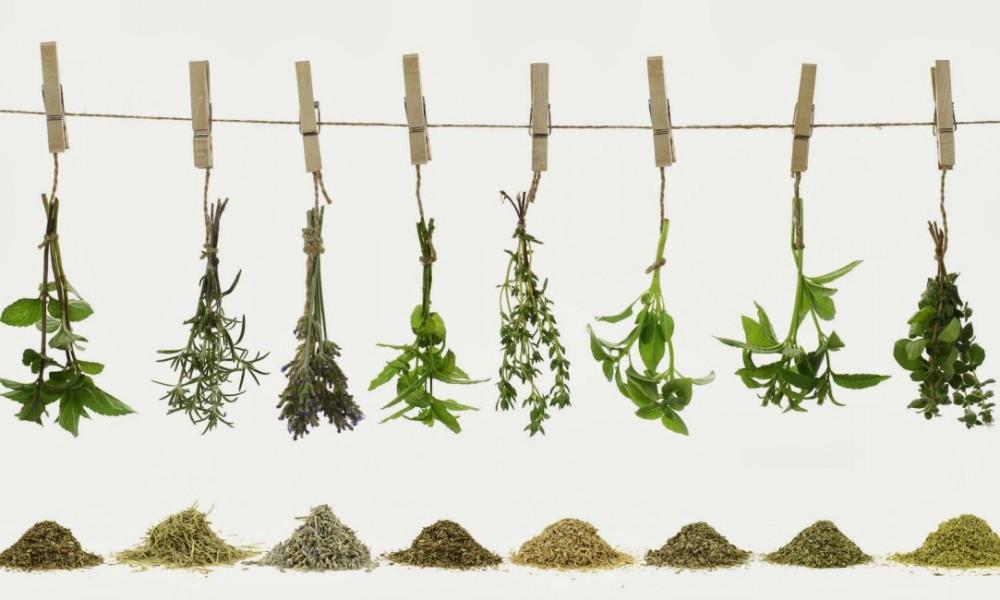 Producción y puesta en valor de plantas aromáticas y medicinales