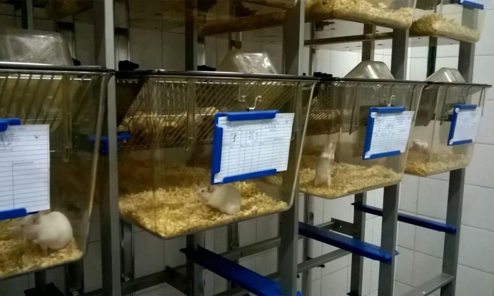 Adquieren cepas certificadas de animales de experimentación