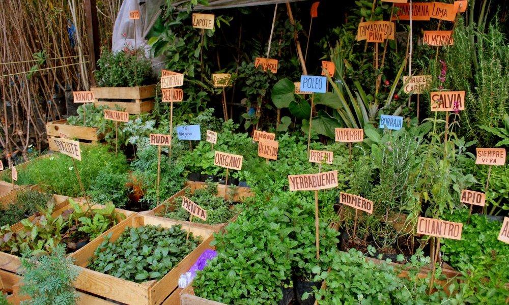 Incursioná en plantas aromáticas y condimenticias