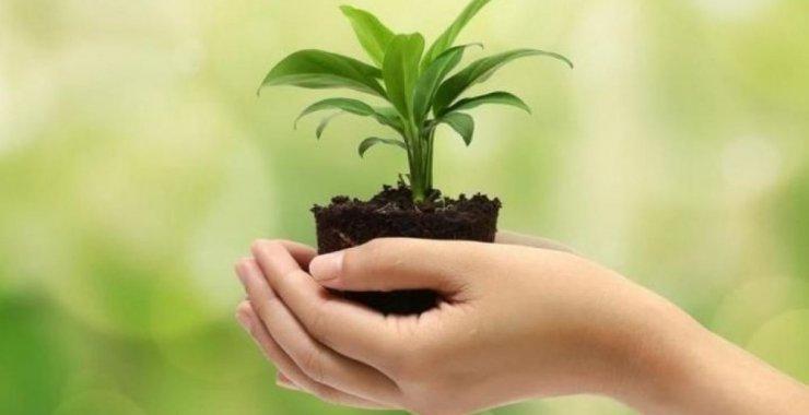 Conmemoran el Día Mundial del Medio Ambiente