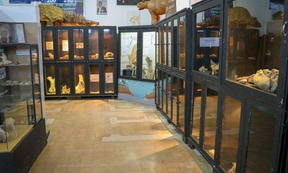 Estrechan vínculos con el Museo Paleontológico Legado del Salado