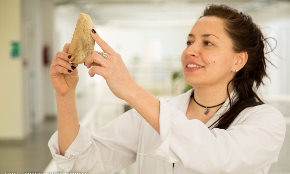 Científicos simulan el telgopor con hongos