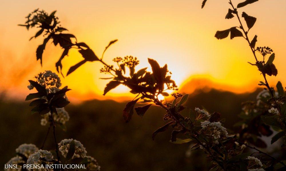 Taller teórico-práctico sobre Flora Nativa