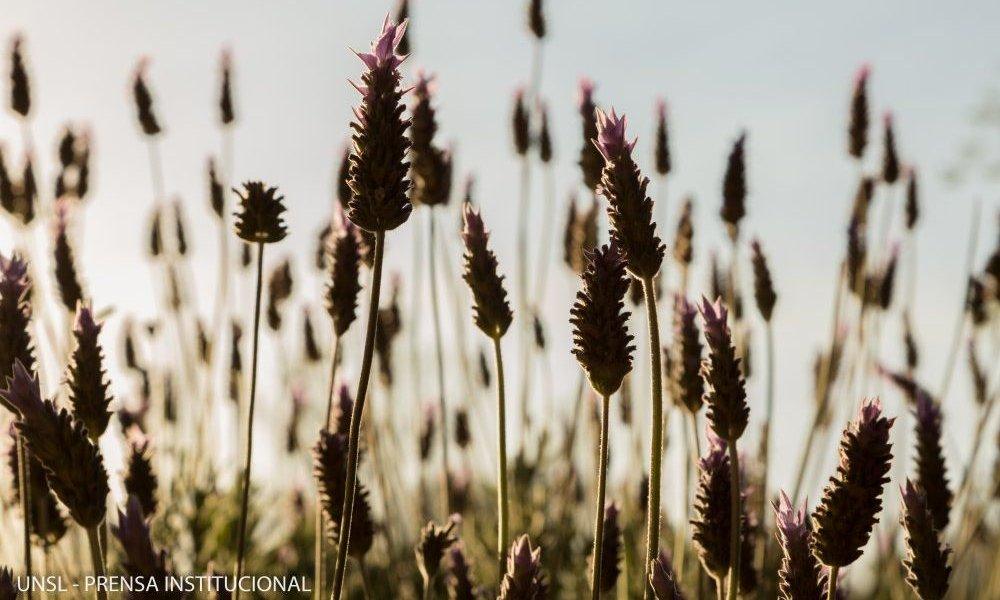 Jornada de actualización en plantas aromáticas
