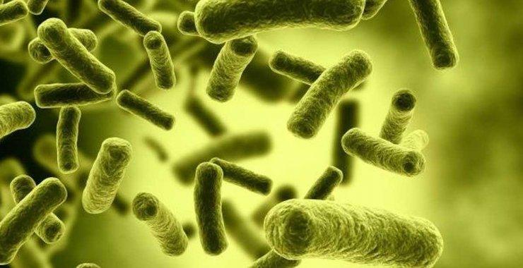 Jornada científica sobre Brucelosis y Tuberculosis